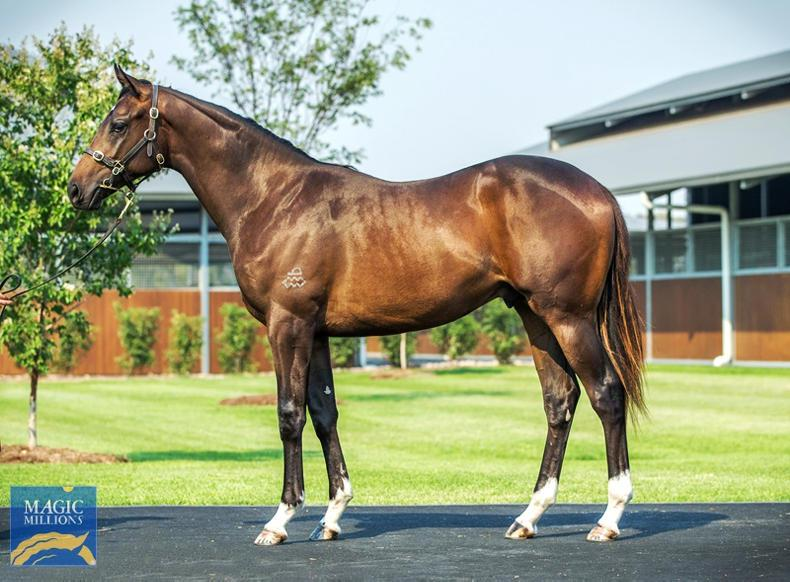 MAGIC MILLIONS SALES: Deep Impact colt heads trade at record-setting sale