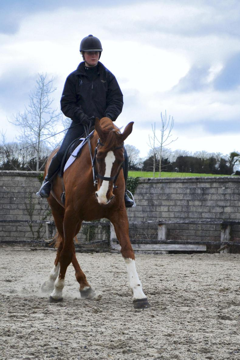 EDUCATION FEATURE 2020: Grennan College Equestrian Centre
