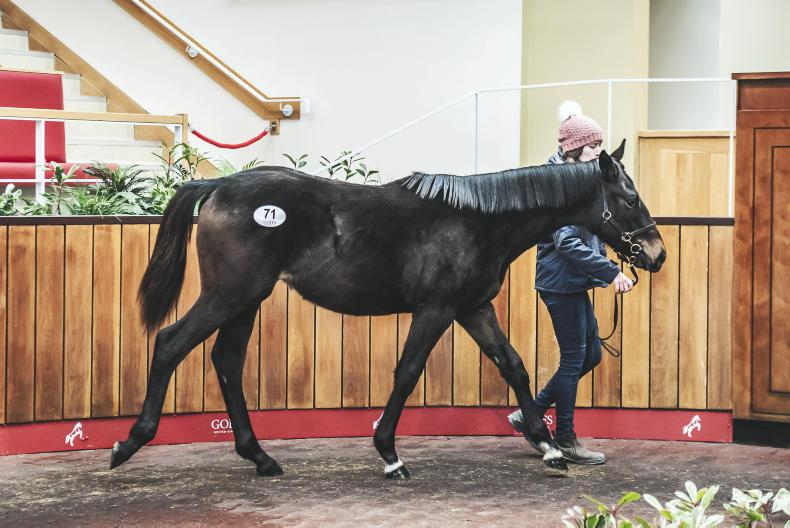 Blue Bresil colt sold for £55,000 at Goffs UK