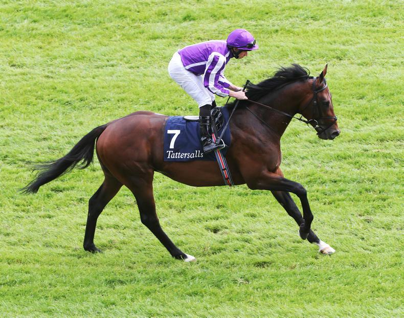 SIRE REVIEW: Magna Grecia (IRE) - Standing at Coolmore Stud