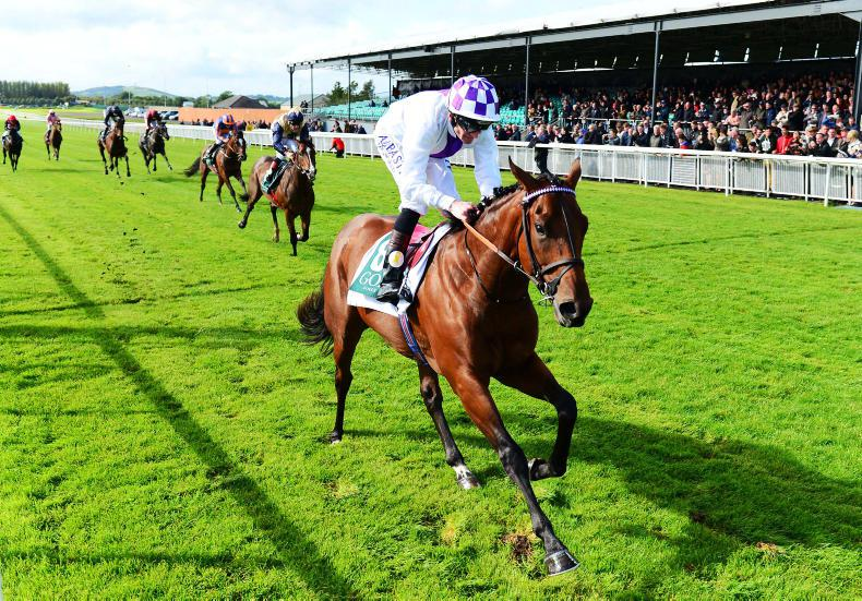 GOFFS FEBRUARY SALE PREVIEW: Wide choice of stock in Kill