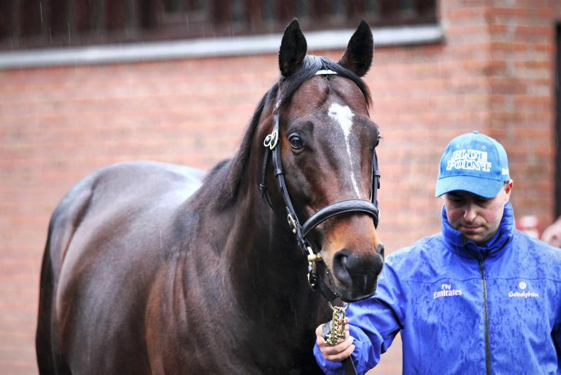 SIRE REVIEW: Blue Point (IRE) - Standing at Kildangan Stud