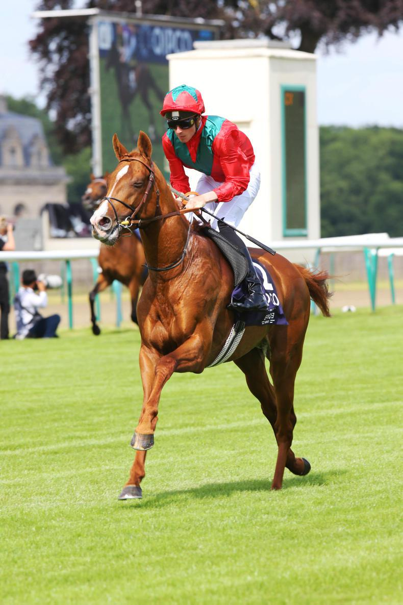 SIRE REVIEW: Waldgeist (GB) - Standing at Ballylinch Stud