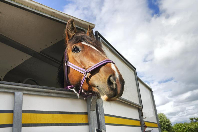 HORSE SENSE: Transport feature 2020