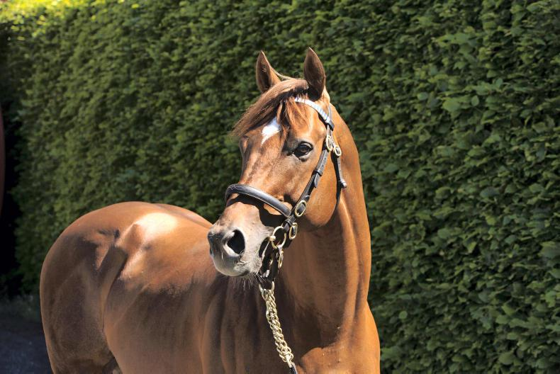 SIRE REVIEW: Night Of Thunder - Standing at Kindangan Stud