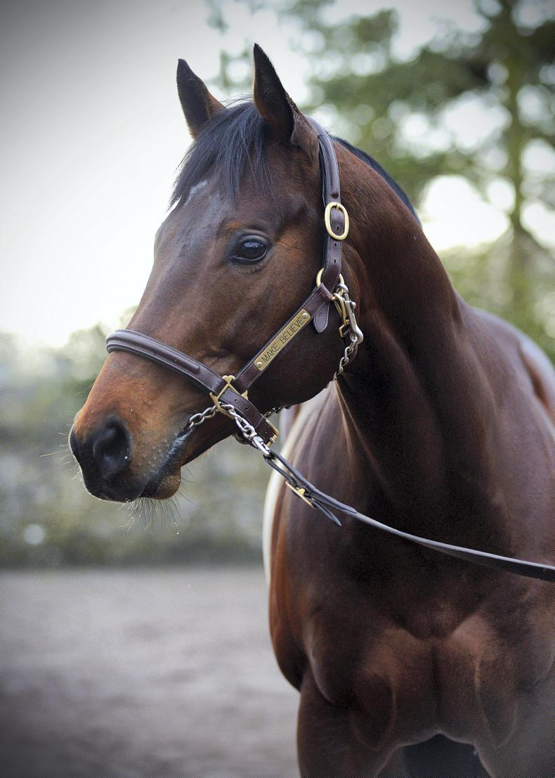 SIRE REVIEW: Make Believe - Standing at Ballylinch Stud