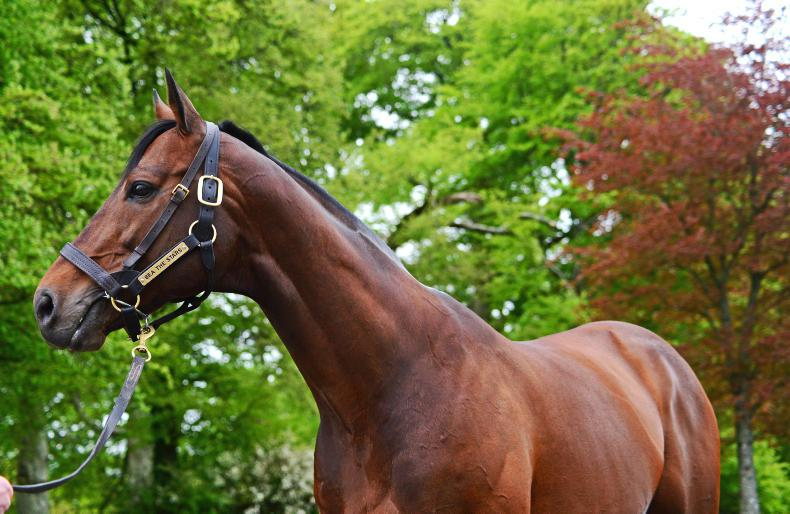 SIRE REVIEW: Sea The Stars - Standing at Gilltown Stud