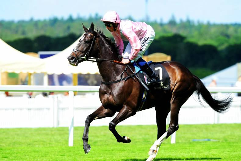 Racing and breeding prospects