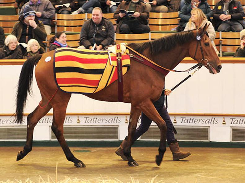 SALES: Another has Sovereigns date after starring on opening day at Tattersalls