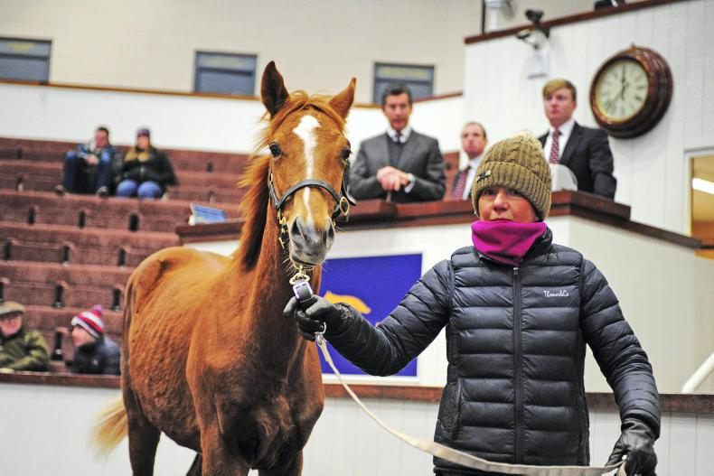 TATTERSALLS IRE FEBRUARY NH SALE: Risk rewards Rahinstown