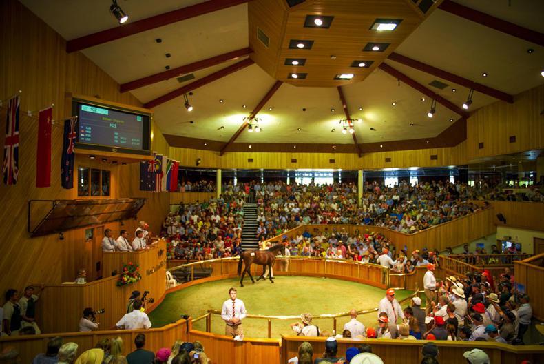 NEW ZEALAND: Pierro colt tops healthy Karaka Sale at $900,000