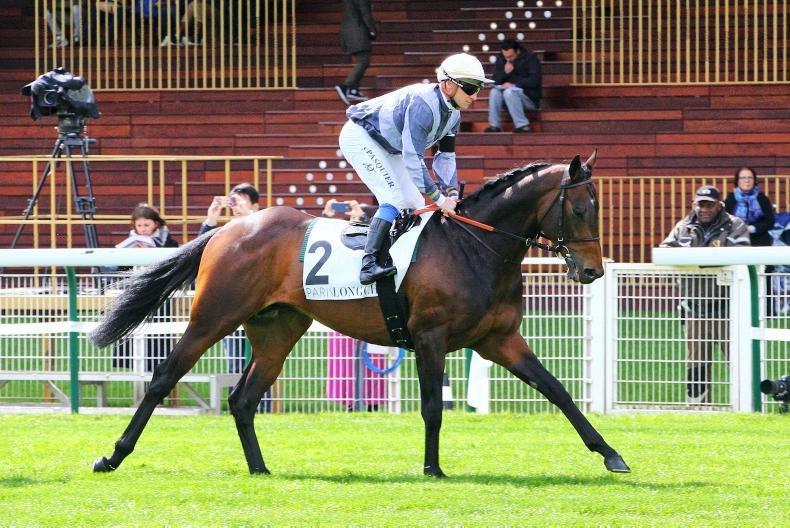 SIRE REVIEW: Study Of Man - Standing at Lanwades Stud