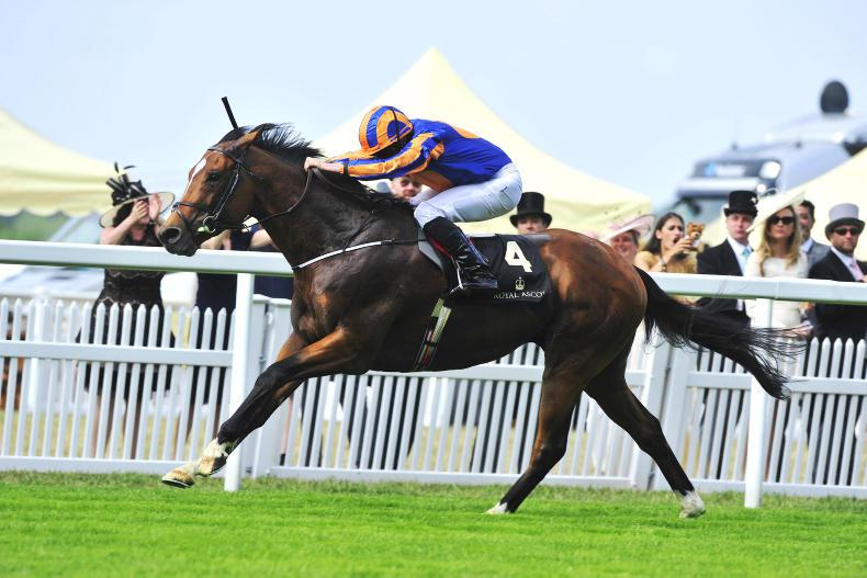 SIRE REVIEW: Gleneagles - Standing at Coolmore Stud