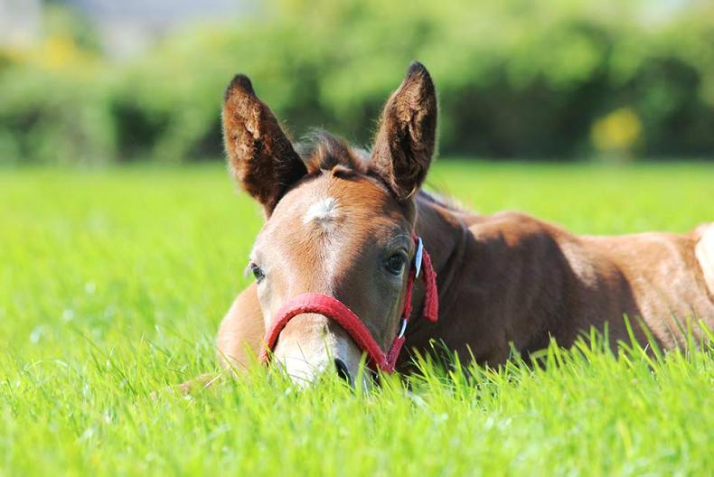 HORSE SENSE FOALING FEATURE 2019