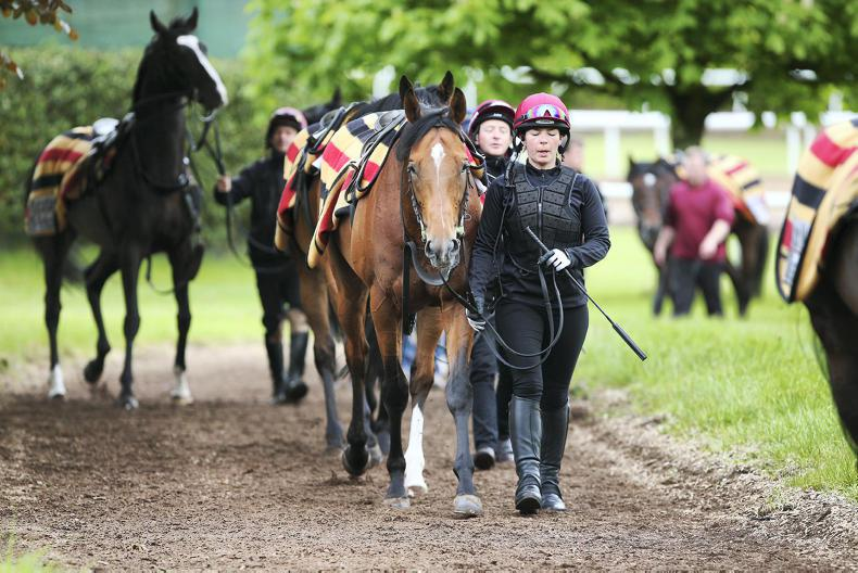 BALLYDOYLE STABLE TOUR: Warrior armed for the Derby and Triple Crown