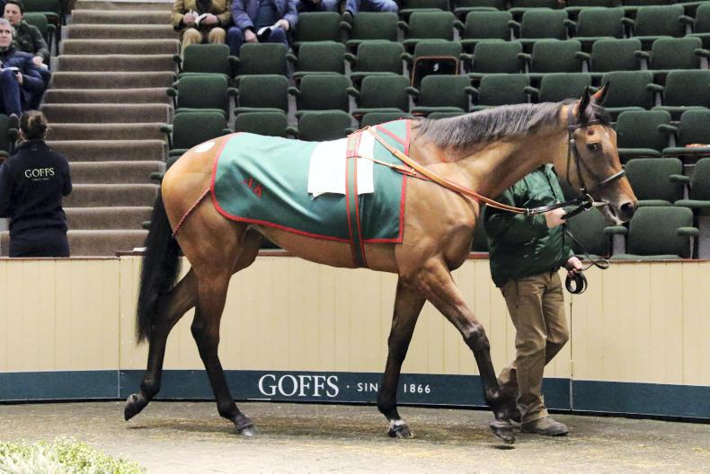 SALES: Filly from Aga Khan draft heads selective breeding stock session at Goffs
