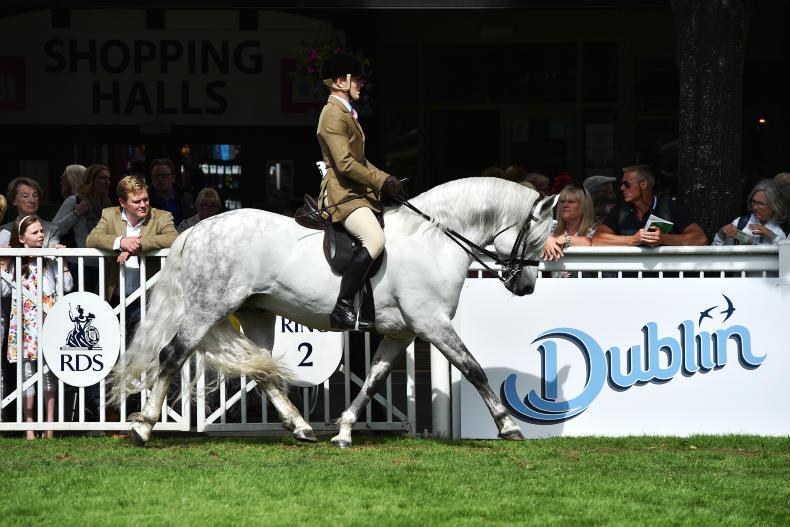 Dublin Horse Show introduce qualifiers for ridden Connemara Pony classes in 2020
