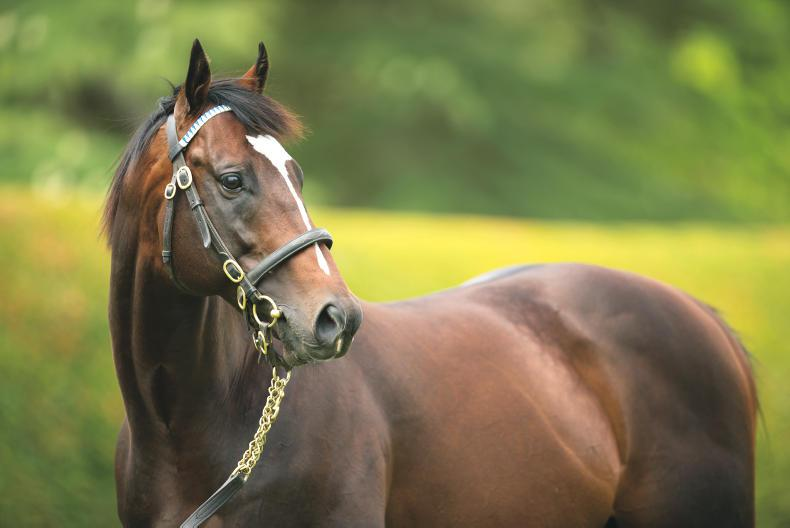 SIRE REVIEW: Fulbright - Standing at Kildangan Stud