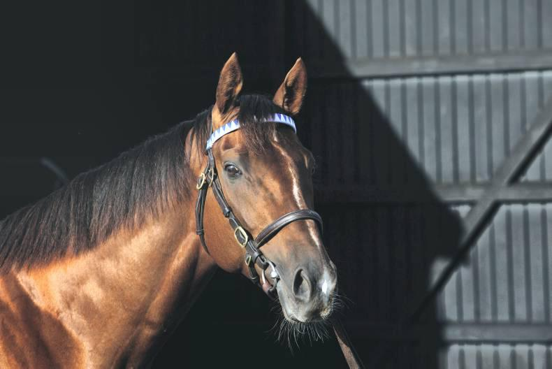 SIRE REVIEWS: Casamento could be a tremendous bargain