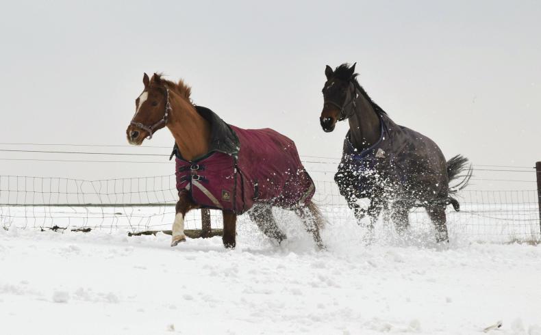HORSE SENSE: Horse owner's winter survival guide