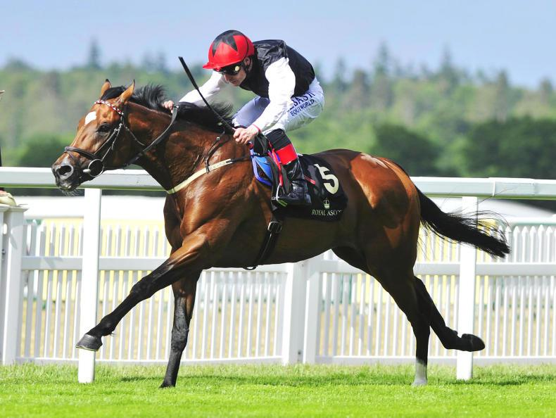 BLOODSTOCK: SIRE REVIEW: Free Eagle - Standing at Irish National Stud