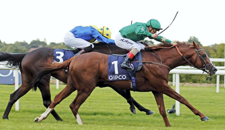 BLOODSTOCK: SIRE REVIEW: Decorated Knight - Standing at Irish National Stud