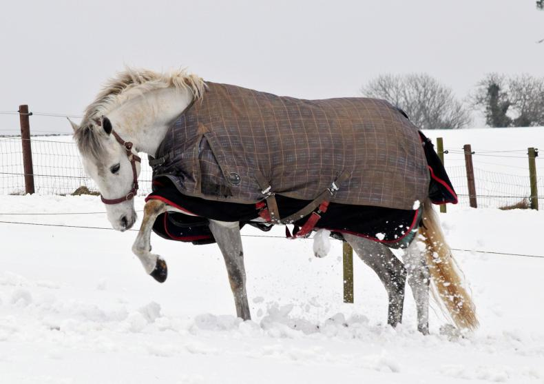 HORSE SENSE: Caring for your horse in tough winter weather