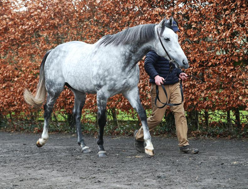 SIRE REVIEW: El Kabeir - Standing at Yeomanstown Stud