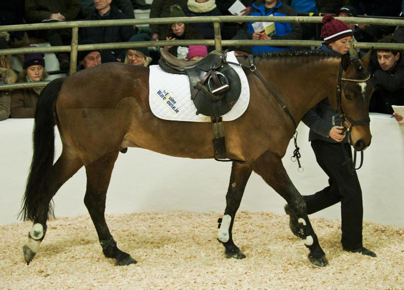 SALES: Top price of €7,200 at Clifden opener