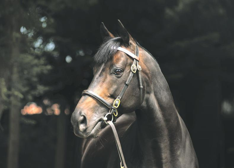SIRE REVIEW: Golden Horn - Standing at Dalham Hall Stud