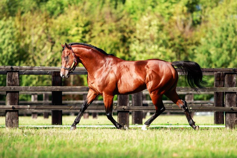 SIRE REVIEW: Siyouni - Standing at Haras de Bonneval