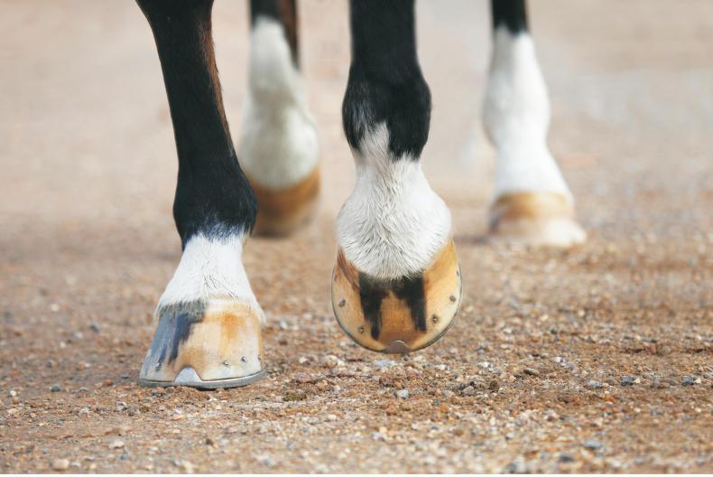 HORSE SENSE: Dealing with a hoof abscess