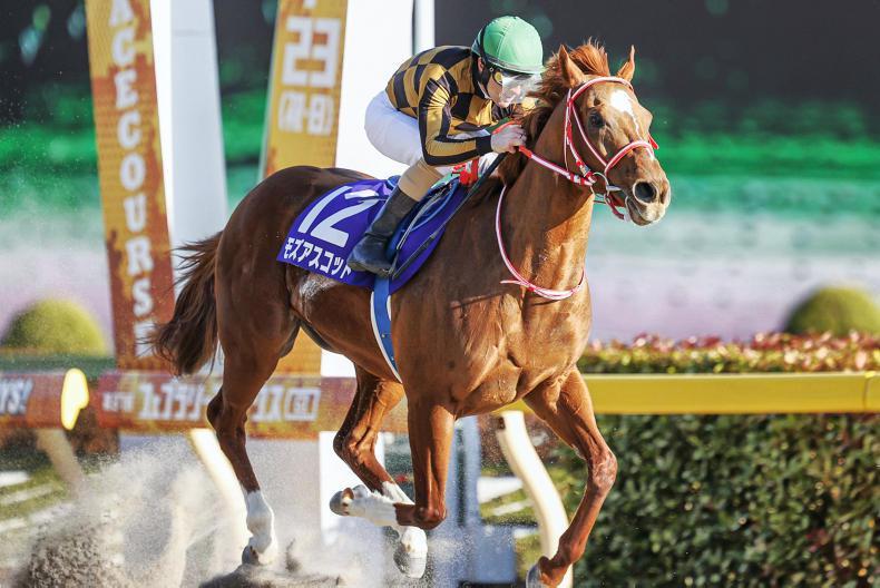 JAPAN: Mozu Ascot maintain his unbeaten record on dirt