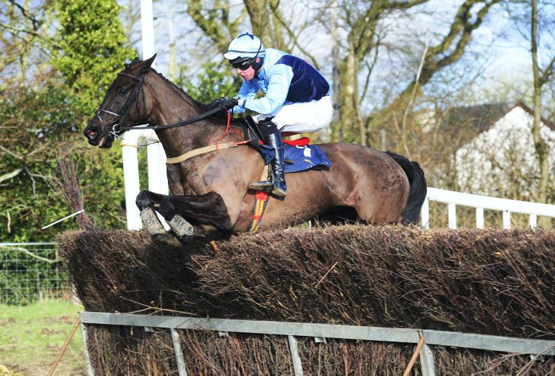 BORRIS HOUSE SUNDAY: No dramas on the track as O'Connell gelding Getzie done