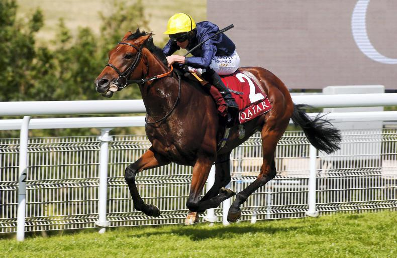 SIRE REVIEW: Crystal Ocean - Standing at The Beeches Stud