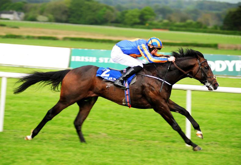 SIRE REVIEW: Due Diligence - Standing at Whitsbury Manor Stud