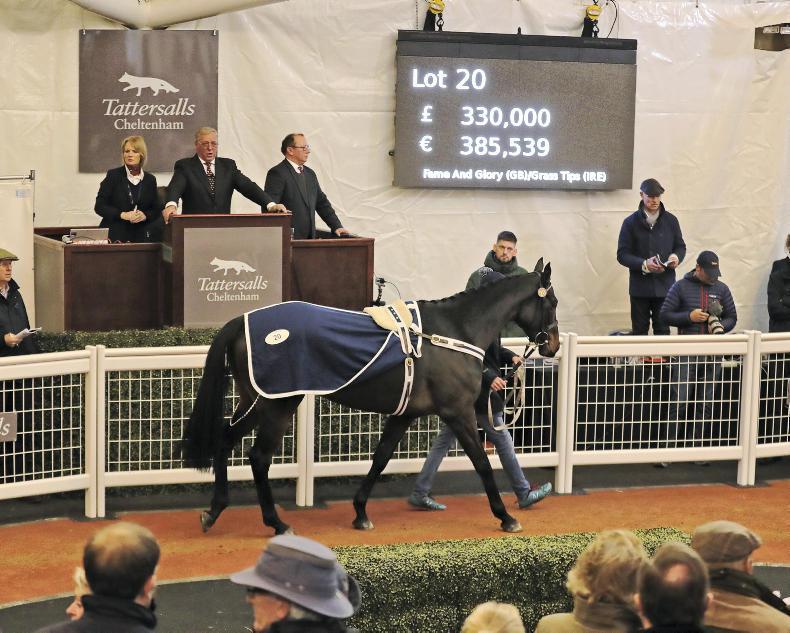 Tattersalls Cheltenham to offer 24 horses for sale on Thursday
