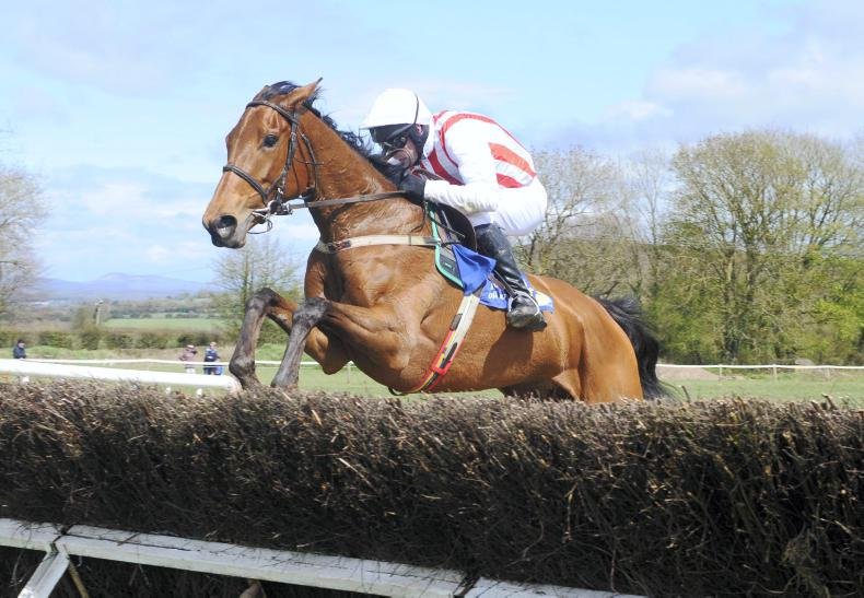 EOGHÁIN WARD: Honeysuckle leads pointing mares
