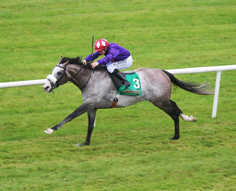 SIRE REVIEW: Success Days - Standing at Kilbarry Lodge Stud