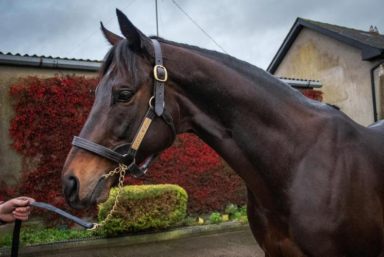 SIRE REVIEW: Poet's Word - Standing at Boardsmill Stud