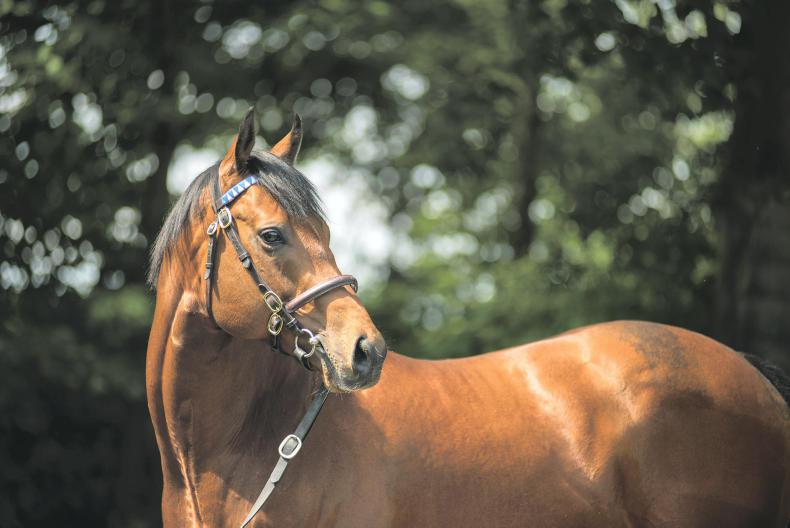 SIRE REVIEW: Charming Thought - Standing at Dalham Hall Stud