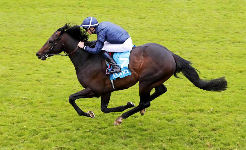 Sir Dragonet in line for Naas return
