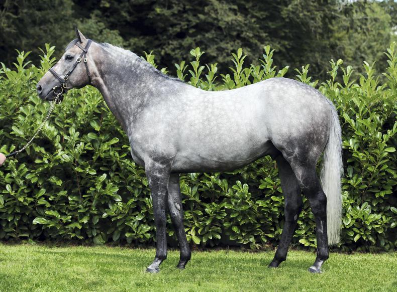 SIRE REVIEW: Kingston Hill - Standing at Castle Hyde Stud