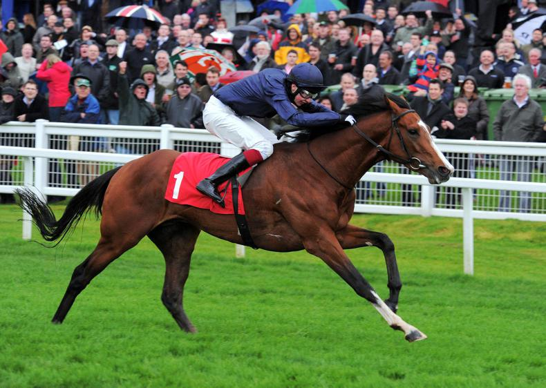SIRE REVIEW: Imperial Monarch - Standing at The Beeches Stud