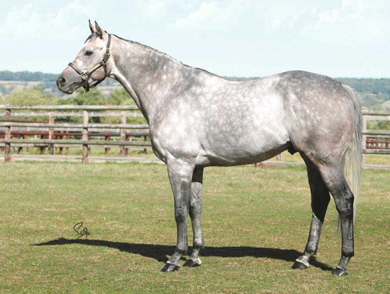 SIRE REVIEW: Sumbal - Standing at Annshoon Stud