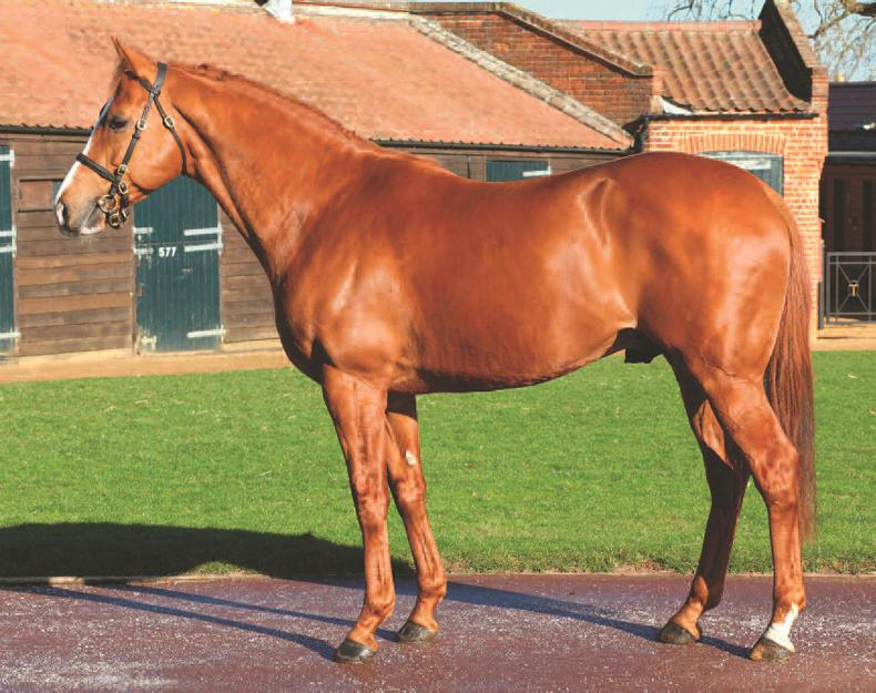 SIRE REVIEW: Proconsul - Standing at Annshoon Stud