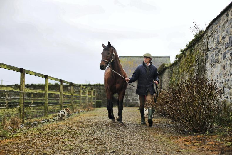 BREEDING INSIGHTS: Zero Ten gives family a huge boost