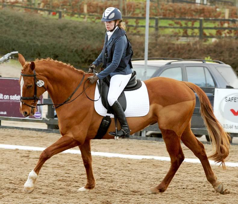 New challenges ahead for para dressage riders