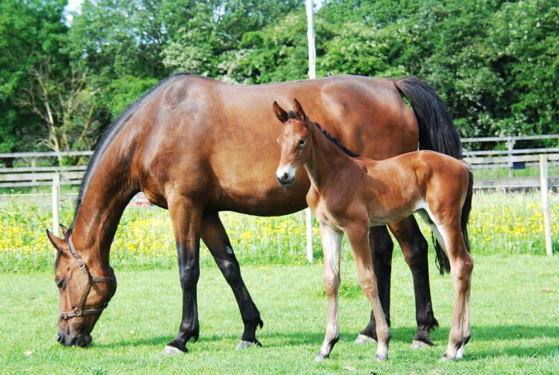 NEWS: Breeders free to take mares to stallion farms under restrictions
