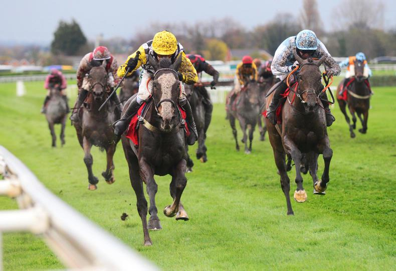 HORSES TO FOLLOW: The Glancing Queen could be a star